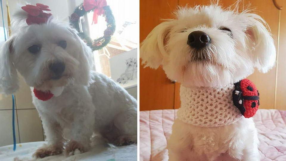 Servicii complete de toaletaj canin in Giurgiu